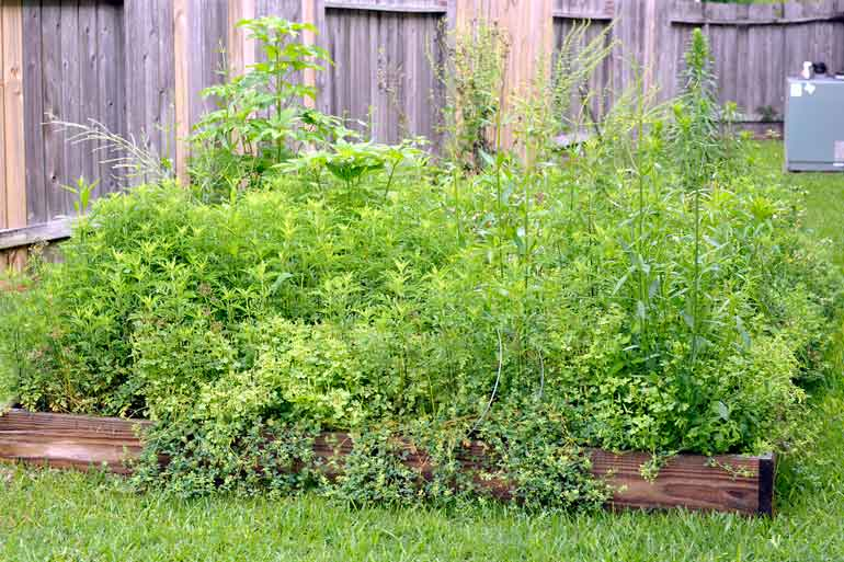 garden overgrown with weeds - Garden Weeds